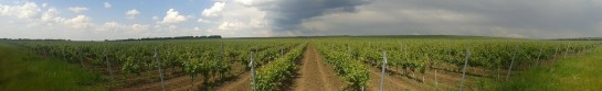 Viticulture Farm For Sale in Romania