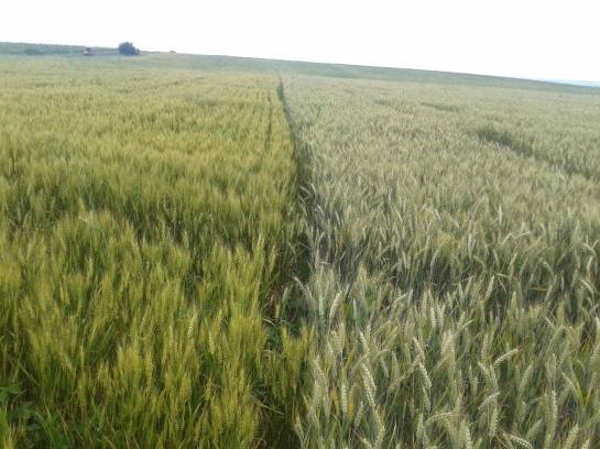 Agricultural Land For Sale In Romania