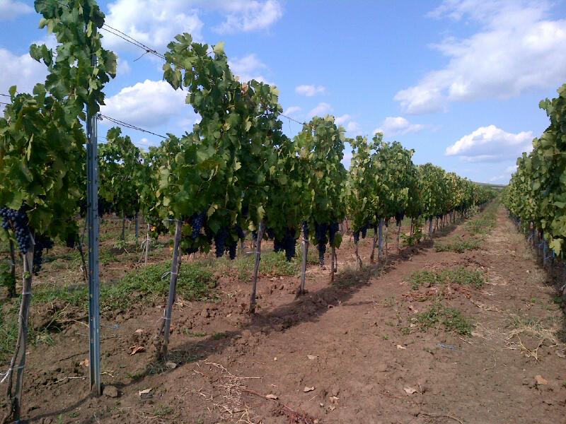 Vine Farms