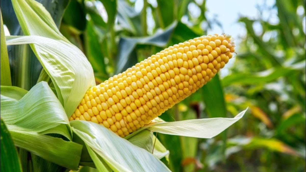 Good investments in Romania - Agriculture in Romania