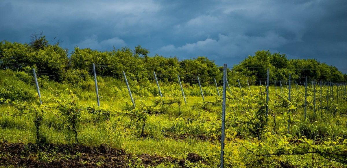 Romania Vine Farms
