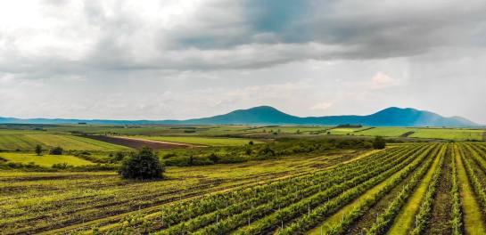 Romania Vine Farm For Sale
