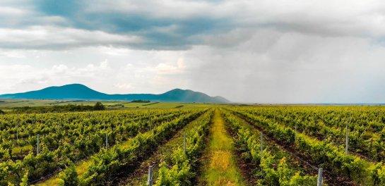 Vineyard For Sale in Romania