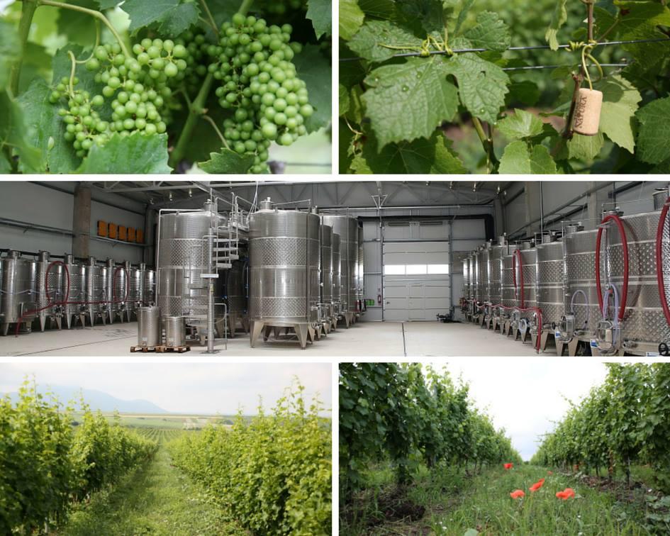 Vine Farms For Sale In Romania