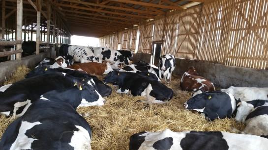livestock farms for sale Romania